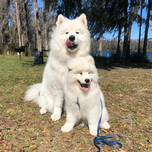 Фото №2 - Если собака без поводка: 15 фото песиков до и после прогулки