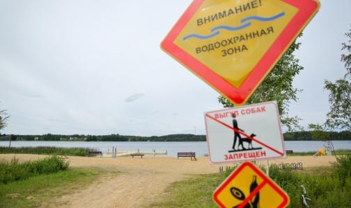 Фото №1 - Роспотребнадзор назвал самые чистые из грязных водоемов Петербурга
