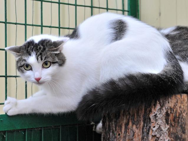 Фото №2 - Котопёс на карантине: кошка Мотя и алабай Артур ждут своих людей