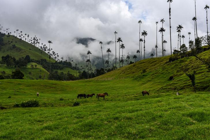 Фото №3 - Маршрут на день: хайкинг в колумбийской долине Кокора