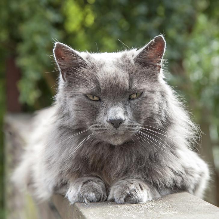 Фото №1 - Пропавший в Швеции кот нашелся на юге Франции