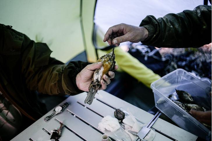 Фото №10 - Остров: трудное счастье жителей Курильской гряды