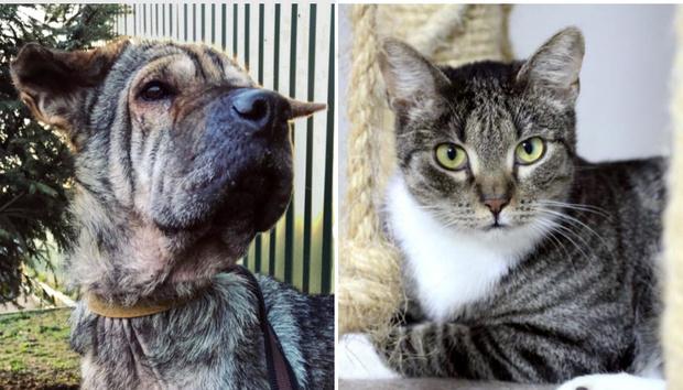 Фото №1 - Котопёс недели: возьми из приюта собаку Бьюти или кота Уильяма