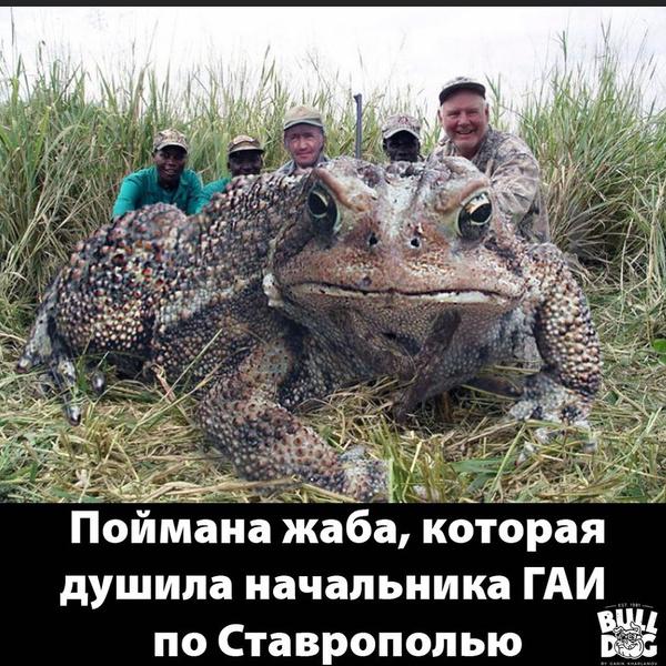 Фото №12 - «Людовик Ставропольский»: Харламов высмеял гаишника с золотым унитазом