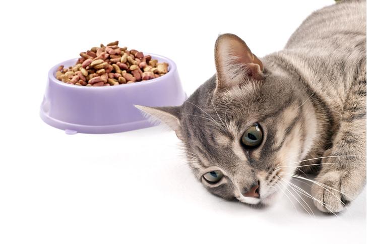 Фото №1 - Кошки не хотят работать за еду