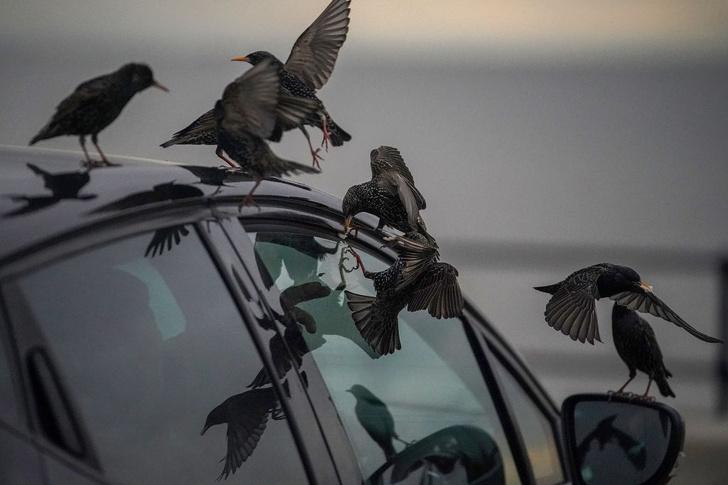 Фото №1 - Птицы быстрее стареют из-за шума машин