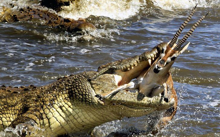 Фото №1 - Опасный водопой