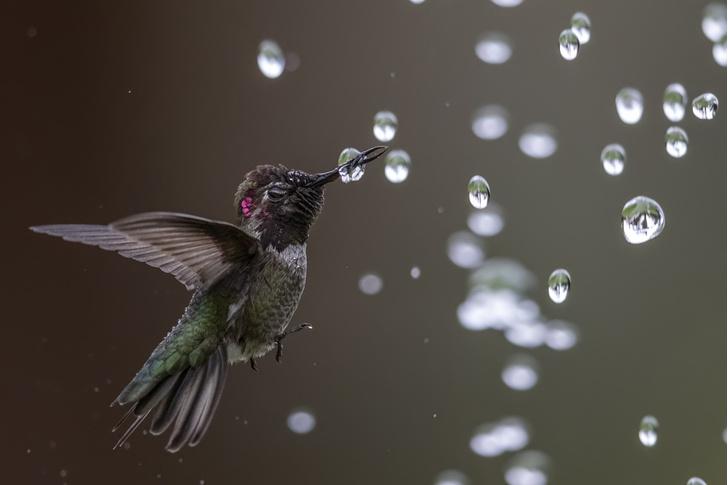 Фото №1 - Капля воды