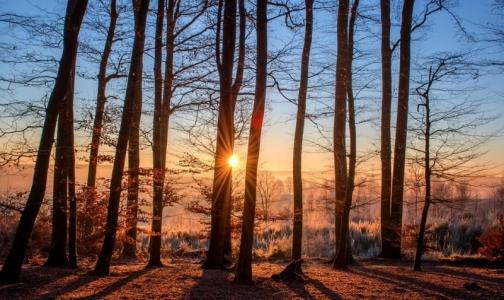 Фото №1 - Тепло разбудило клещей — в выходные от них пострадали 5 петербуржцев