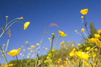 Фото №4 - Смертельно опасны: 3 красивых цветка, которые лучше не рвать
