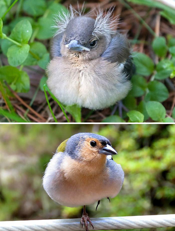 Фото №11 - 30 красивых птиц, которые были уродливыми птенцами (галерея)