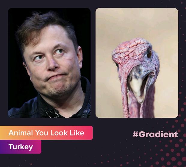 Фото №1 - На какое животное ты похож: новое развлечение от приложения Gradient