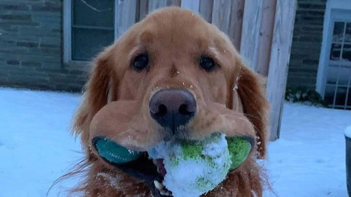 Фото №1 - Пес побил мировой рекорд по числу мячиков во рту (видео)