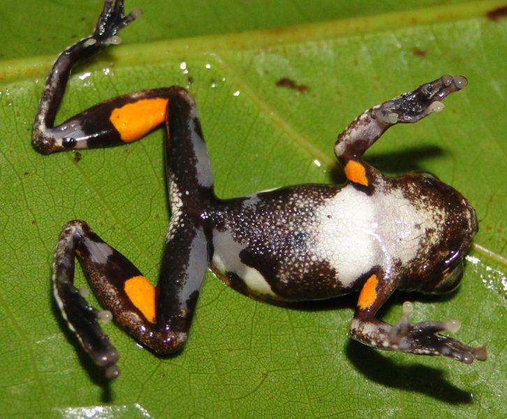 Фото №1 - В честь Стэнли Кубрика назван новый вид лягушек