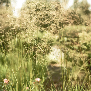 Фото №3 - Венеция, Англия, Восток: 5 садов Millennium Park