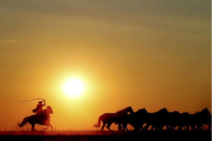 Фото №1 - Местные жители: пастушья воля