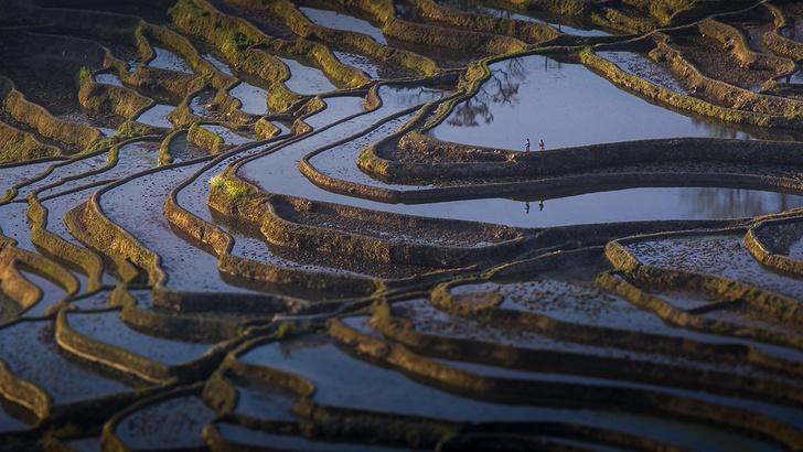 Фото №1 - Рисовые каскады