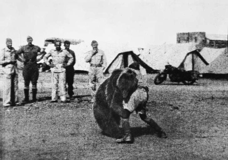 Фото №2 - Косолапый вояка: история одного фото из Ирана