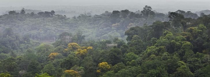 Фото №1 - Тропические леса Амазонии начали выделять углекислый газ