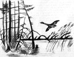 Фото №2 - Доска через ручей
