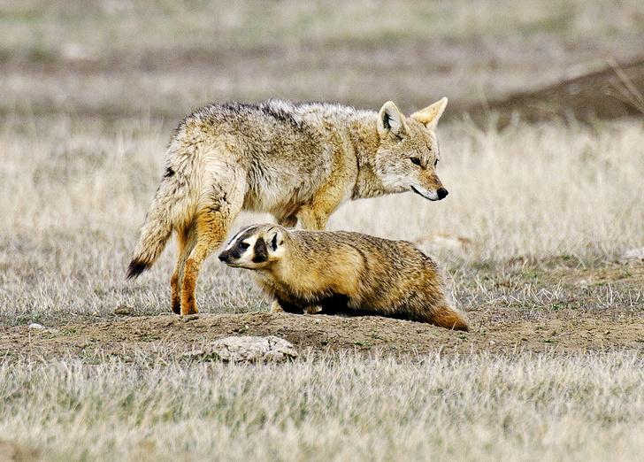 Фото №3 - Зоология: дружественные виды