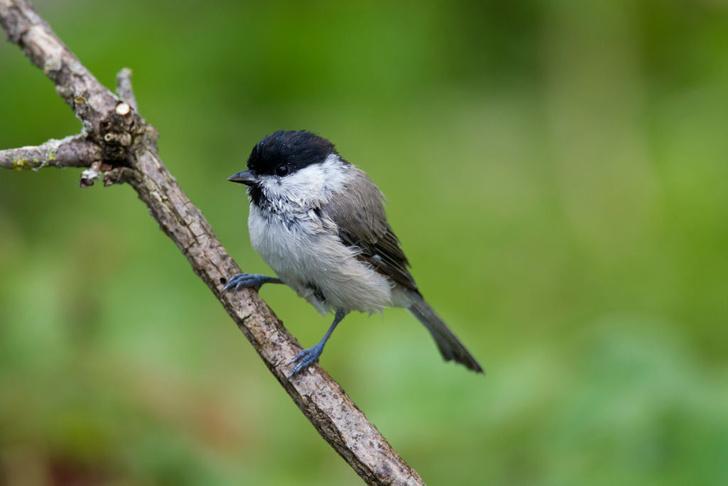 Фото №1 - Как глобальное изменение климата влияет на популяцию птиц
