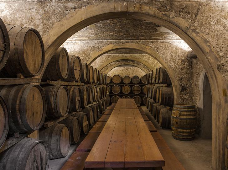 Фото №5 - Вино с приставкой «bio»: кто ввел тренд на биодинамические вина и где их искать