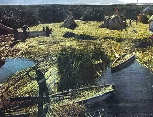 Фото №1 - Камышовый народ уру?