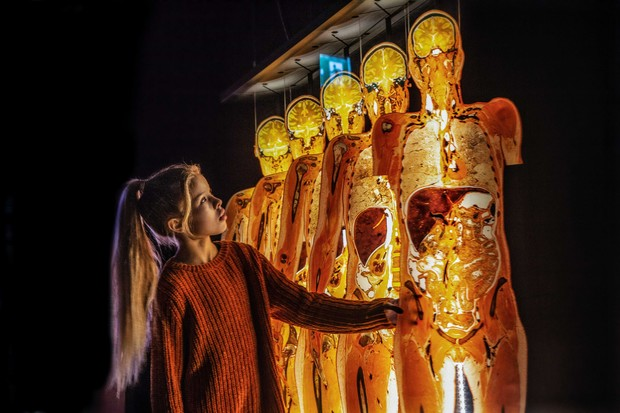 Фото №2 - В Россию приезжает всемирно известная выставка BODY WORLDS