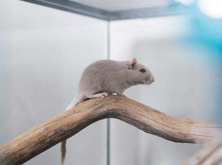 Фото №3 - Синдром «серой мышки»: что делать, если вас не замечают