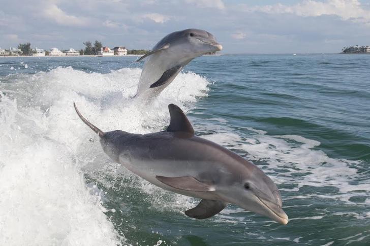 Фото №1 - Дельфины, как и люди, имеют сложные социальные связи