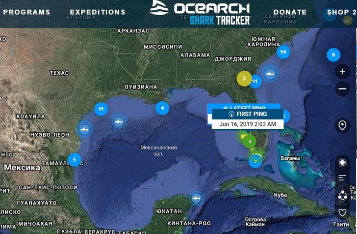 Фото №1 - Сайт дня: следи за морскими обитателями в режиме реального времени
