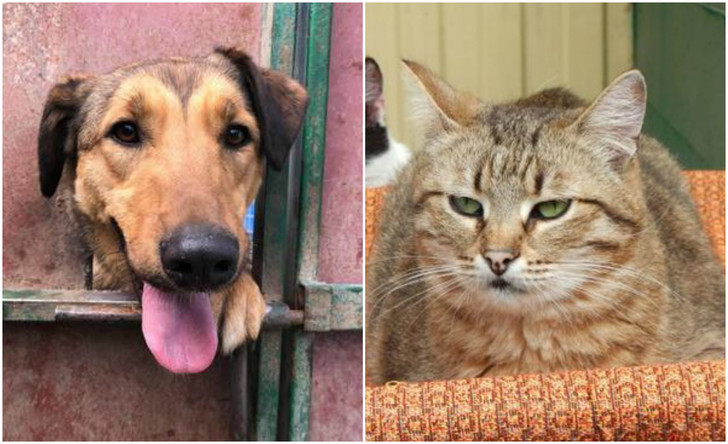 Фото №1 - Котопёс недели: кошка Дороти и собака Морковка