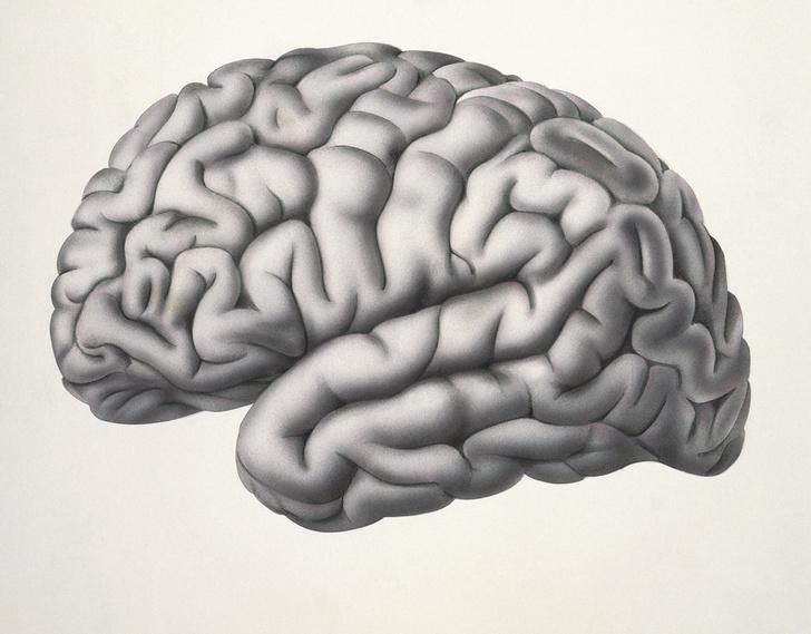 Фото №1 - Структура мозга людей уникальна как и отпечатки пальцев