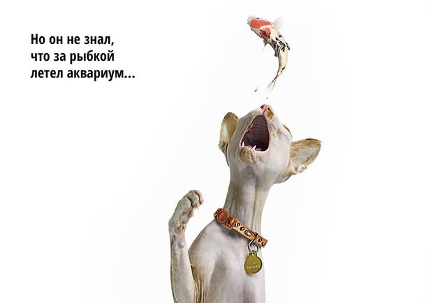 Фото №8 - Код кота: 31 ответ на вопросы котовладельца