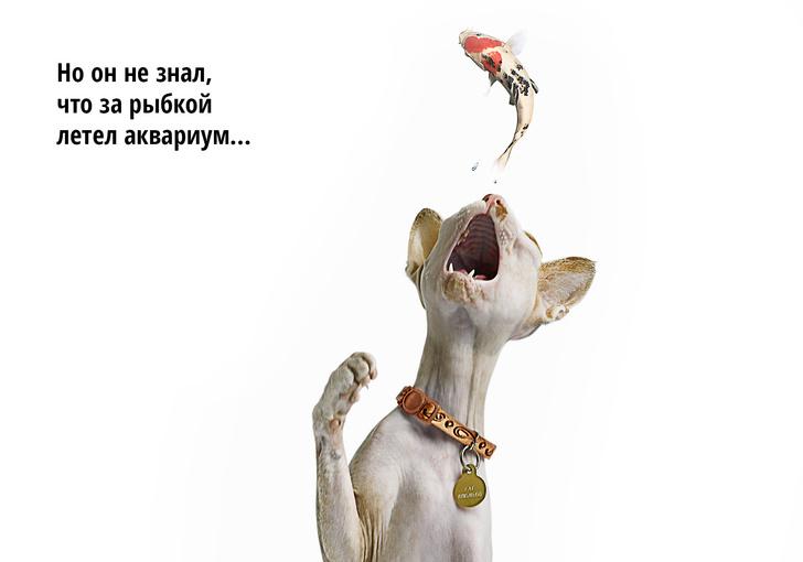 Фото №7 - Код кота: 31 ответ на вопросы котовладельца