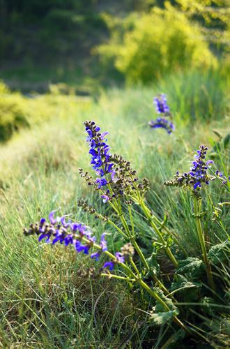 Фото №4 - Вечное лето: 5 долгоцветущих растений для сада