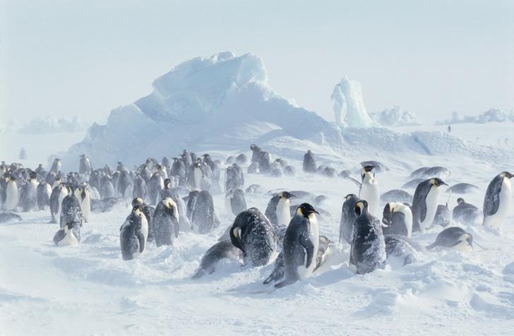Фото №1 - Два века в Антарктиде