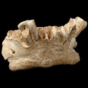 Фото №1 - Древние люди жили в Испании