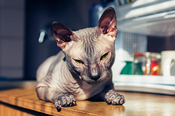 Фото №1 - Генетика: котенок от дизайнера