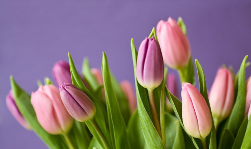 Фото №1 - Какие цветы  лучше не дарить на 8 марта, посоветовал врач