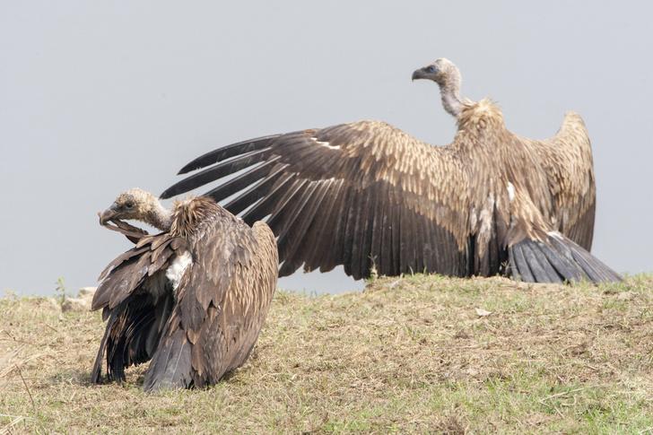 Фото №1 - В Ботсване зафиксирована очередная массовая гибель животных
