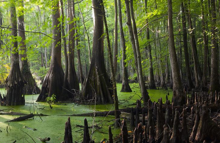 Фото №3 - Притягательная трясина: 12 самых живописных болот мира