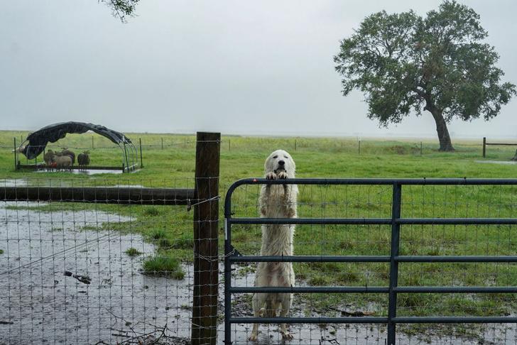 Фото №1 - После урагана