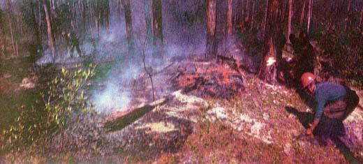 Фото №3 - Идем на горящий лес