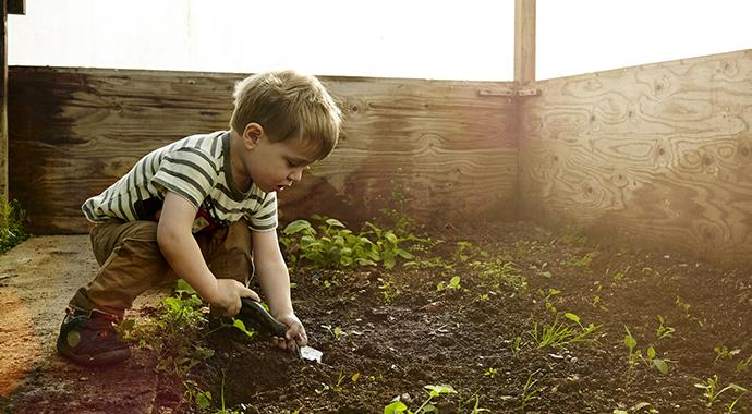 Посадить дерево: чему нас учит садоводство