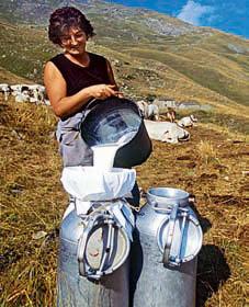 Фото №1 - Какой жирности молоко из-под коровы?