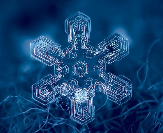 Фото №1 - Зимние звезды