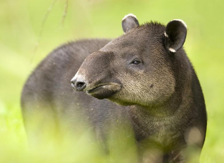 Фото №8 - Последние: семейства млекопитающих, которым грозит исчезновение