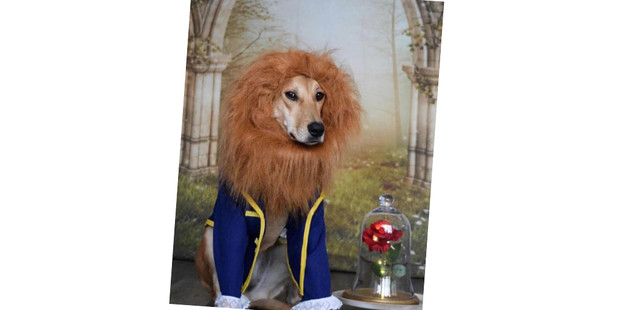 Фото №9 - 20 очаровательных собак в костюмчиках по мотивам мультфильмов Disney